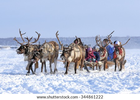 "Nadym, Russia - March 01, 2014: People ride deer during the holiday ""Day of the reindeer breeder"". Day of the reindeer breeder - a traditional holiday of the tundra population"