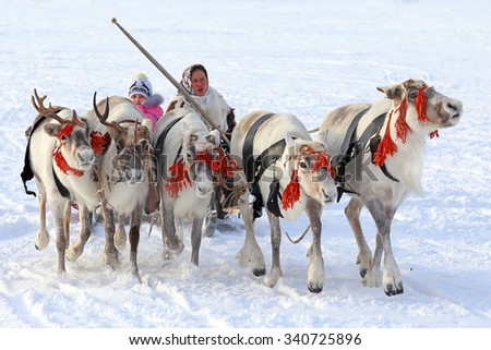 """NADYM, RUSSIA - MARCH 14, 2015: the Nenets woman operates a cervine team during a traditional holiday """"Day of reindeer breeders"""". Nenets - aboriginals of the Russian North - stock photo"""