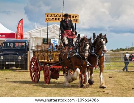 NAIRN, SCOTLAND - JULY 28: Clydesdale horses pull an antique carriage at the annual Nairnshire Farmers Society show on JULY 28, 2012 in Nairn, Scotland. - stock photo