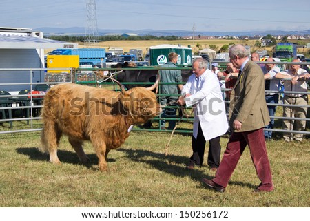 NAIRN, SCOTLAND - JULY 27: Unidentified farmer displays his cattle at the annual Nairnshire Farmers Society show on JULY 27, 2013 in Nairn, Scotland. - stock photo
