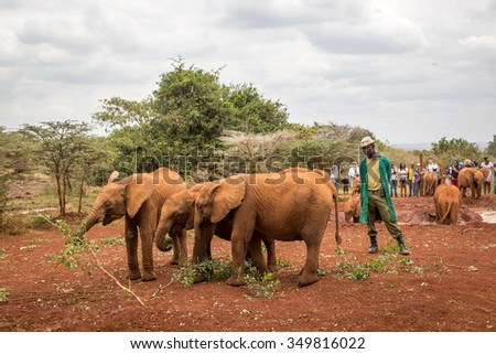 Nairobi, Kenya - October 15th 2015 - Tourists and locals visiting the Sheldrick Elephant Conservancy in Nairobi, Kenya's capital, East Africa.