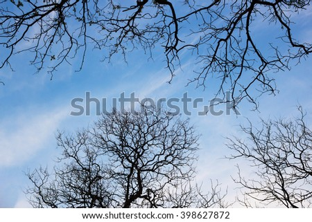 Naked branches of a tree against  sky close up