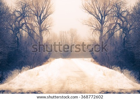Naked Trees in a Winter fogy day , snow was covering all the aground in Denver of Colorado - United State  - stock photo