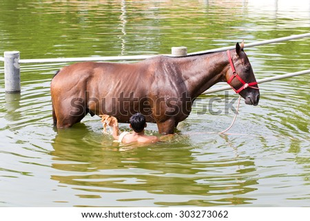 Nakhonratchasima, THAILAND - July 30, 2015 : A man washes horse race in canal. - stock photo