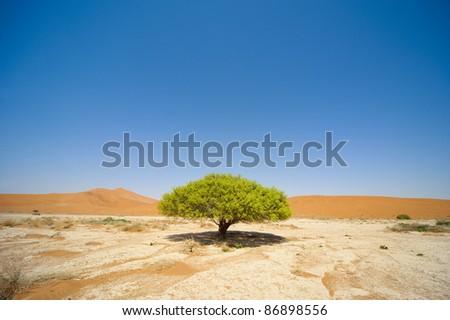 Namibia Desert, Sossusvlei - stock photo