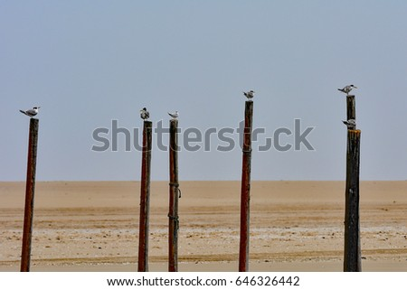 Namibia Walvis bay seagulls on posts
