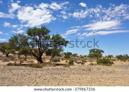 Namibian landscape. A Gemsbok (Oryx gazella) in the Namib desert, Namibia, Africa - stock photo