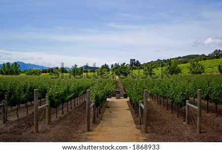 Napa Valley - stock photo