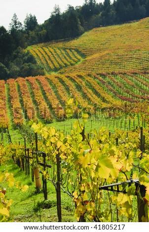 Napa valley vineyard - stock photo
