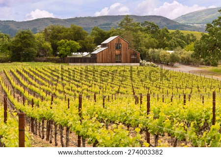 Napa Valley Vineyards, Spring, Mountains, Sky, Clouds, Barn - stock photo