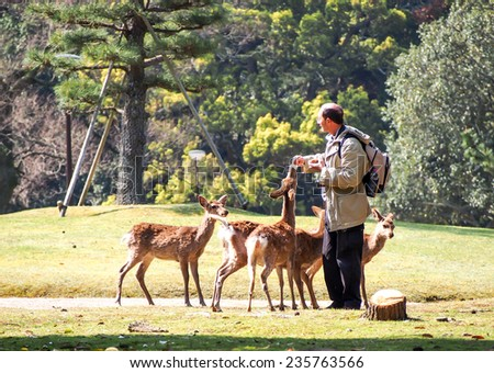 NARA-APR 19: Tourist feed deer at Nara park on April 19, 2014 in Nara, Japan. the deer in Nara have been regarded as heavenly animals. - stock photo