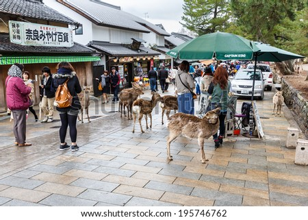 NARA, JAPAN - APRIL 6: Tourists and wild deer in Nara on April 6, 2014. The deer in Nara have been regarded as heavenly animals, protecting the city and the country.