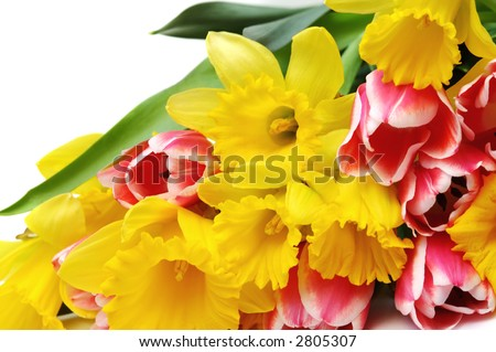 Narcissus and tulips - stock photo