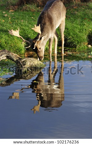 Narcissus Fallow - stock photo