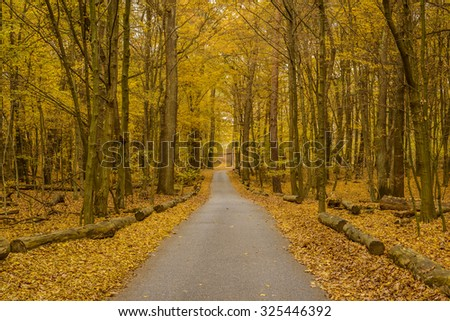 narrow asphalt road in colorful autumn forest - stock photo