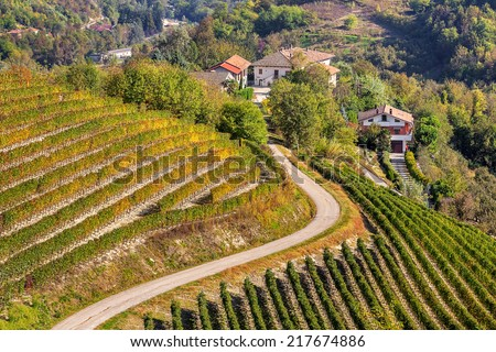 Narrow road among autumnal vineyards on the hills of Piedmont, Northern Italy. - stock photo