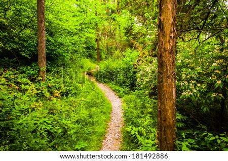 Narrow trail through a lush forest at Codorus State Park, Pennsylvania. - stock photo