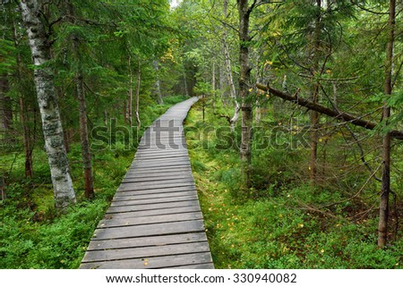 Narrow wooden pathway in the forest fen