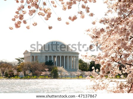 National Cherry Blossom Festival, Japanese Cherry Blossom trees, tidal basin and Jefferson Memorial