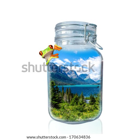 National park in the jar with frog - stock photo