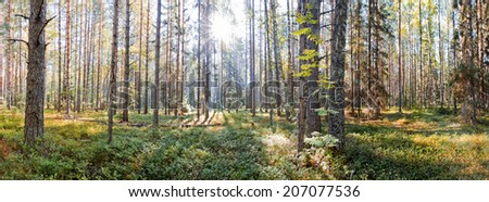"National Park ""Russian North"" in Vologda region. Summer panorama - stock photo"