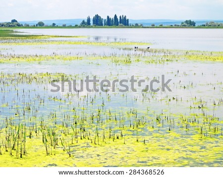 Nationalpark Neusiedler See - Seewinkel - stock photo