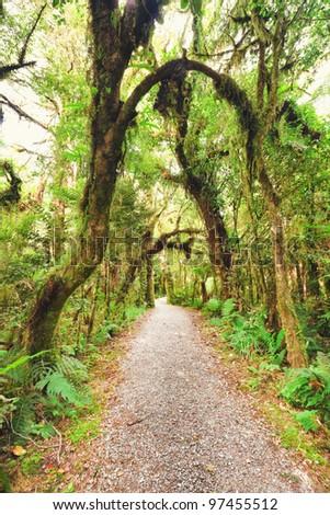 Native bush of New Zealand - stock photo
