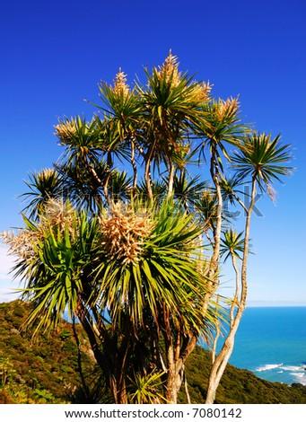 Native New Zealand Cabbage Tree - stock photo