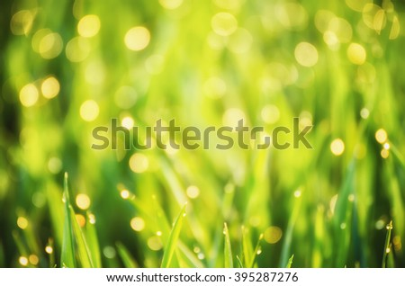 Natural abstract soft green eco sunny background with grass and light spots - stock photo