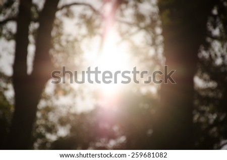 natural and  sunlight background of out of focus forest or bokeh and blurred - stock photo