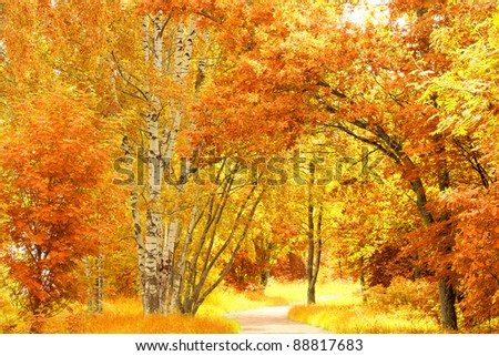 Natural Background Autumn Leaves