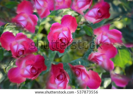 Natural background, flowers