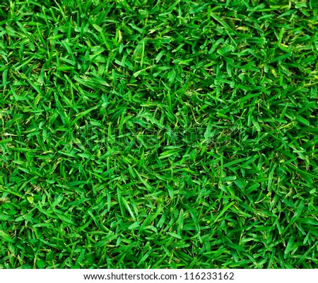 Natural background - green grass texture - stock photo