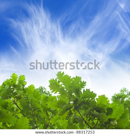 Natural background - green oak leaves, blue sky, white clouds - stock photo