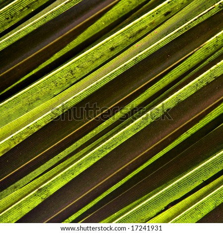 Natural background. Green palm leaf 04