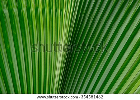Natural background of green foliage.
