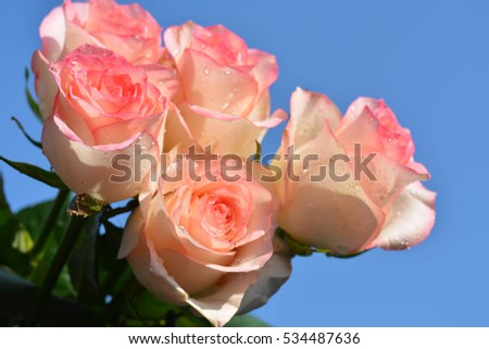 Natural background, roses