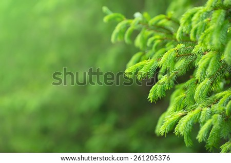 Natural background with bright fir branches - stock photo