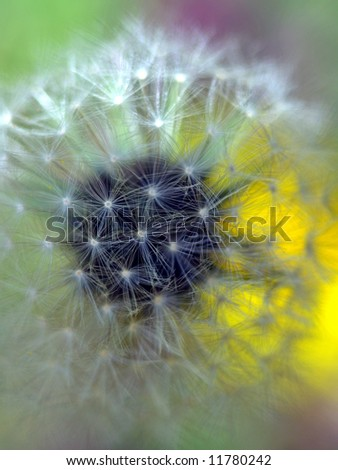 Natural background with dandelion - stock photo