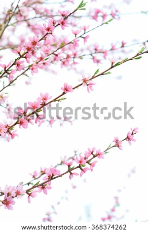 Natural background with fresh spring twig with pink flower in selective focus