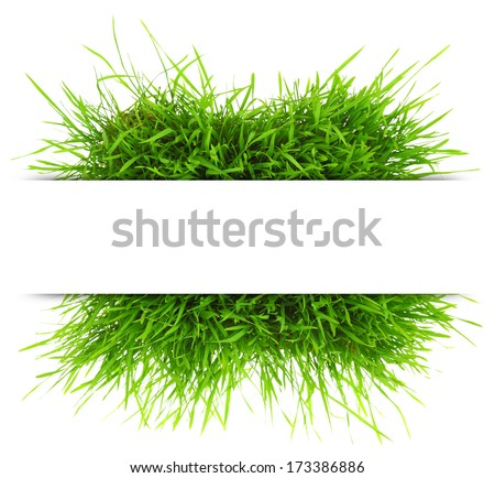 Natural banner with fresh grass isolated on white background - stock photo