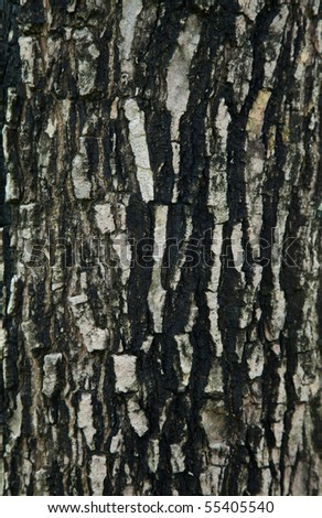 Natural bark of the tree in the park - stock photo