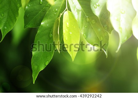 Natural blurred background. light nature air trees day earth outdoor concept bokeh blur ecology plant Love Sun New Life Leaf Dirt Eco Gap Up Stem Herb Close Old Art Twig Disc Lush Bush Maple Macro Dew - stock photo