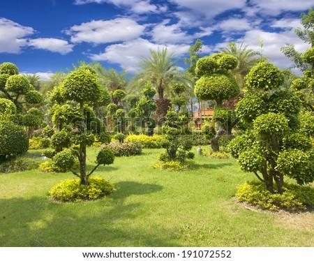 Natural bonsai tree garden Lush green parks. - stock photo