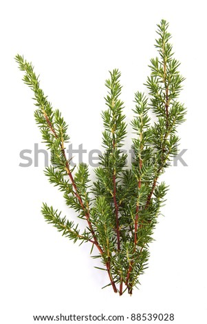 natural branches isolated on white spruce - stock photo