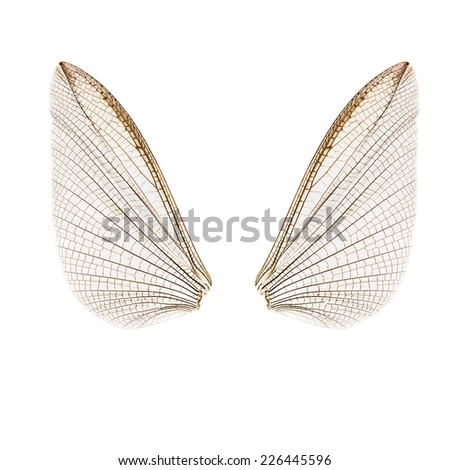 Natural bug wings. Isolated on white - stock photo