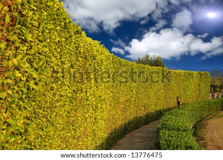 natural bush fence in park - stock photo