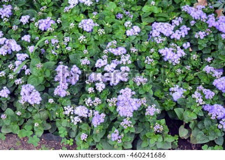 Natural bush with purple small flowers.