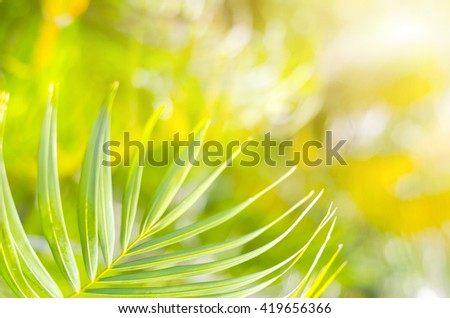 Natural defocused and depth of field (DOF) effect of palm leaf, the bokeh effect and morning sunlight - stock photo
