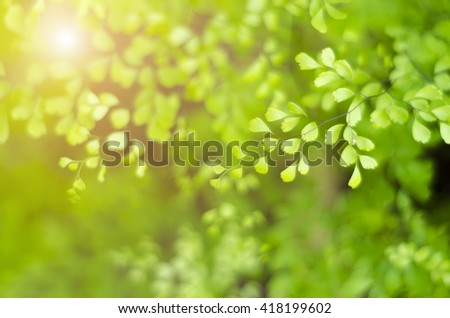 Natural defocused green background, the bokeh effect - stock photo